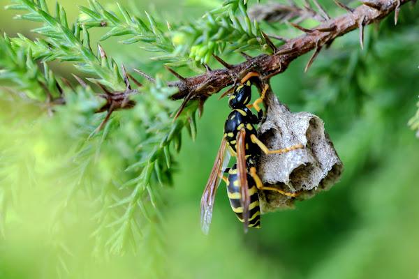 Costruire il proprio nido di ScrofaniRosaria
