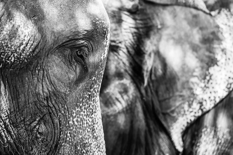 Elefante di Dario Lo Presti