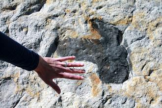 Photo: Dinosaur Footprint