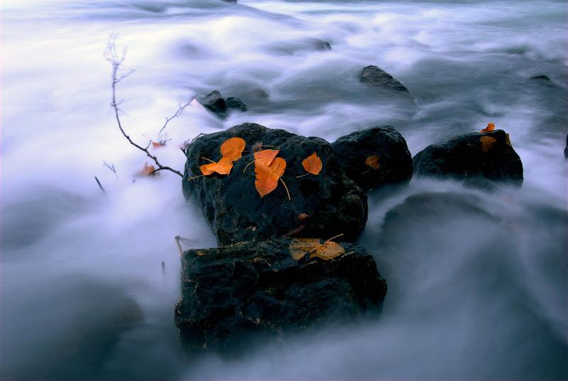 Liquido autunno di Daimon