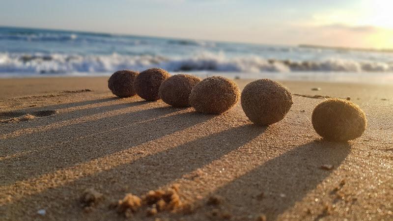 Palle di mare di Zoe
