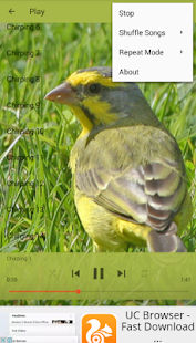 Chirping Yellow Canary - náhled
