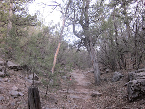 Photo: Nice trail in here, reminded us a lot of the Massanutten trails in Virginia