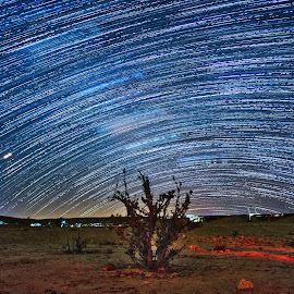 the lonely bush by Ilan Abiri - Landscapes Starscapes ( landscape photography, milky way, bush, night, long exposure, stars, colors, blue, nightscape, skies, desert, landscape, star trails, night photography )