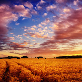 20160703_DSC_5182 by Zsolt Zsigmond - Landscapes Prairies, Meadows & Fields ( sky, field, sunset, wheat, clouds )