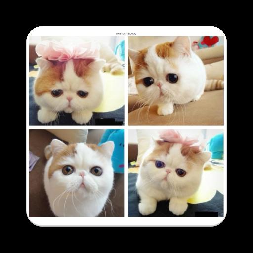 Cute Little Cats (app)