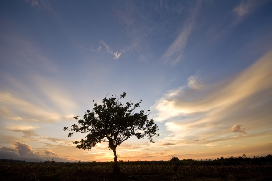 by MaQLyn Morales - Nature Up Close Trees & Bushes
