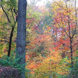 by Lisa Attas - Nature Up Close Trees & Bushes