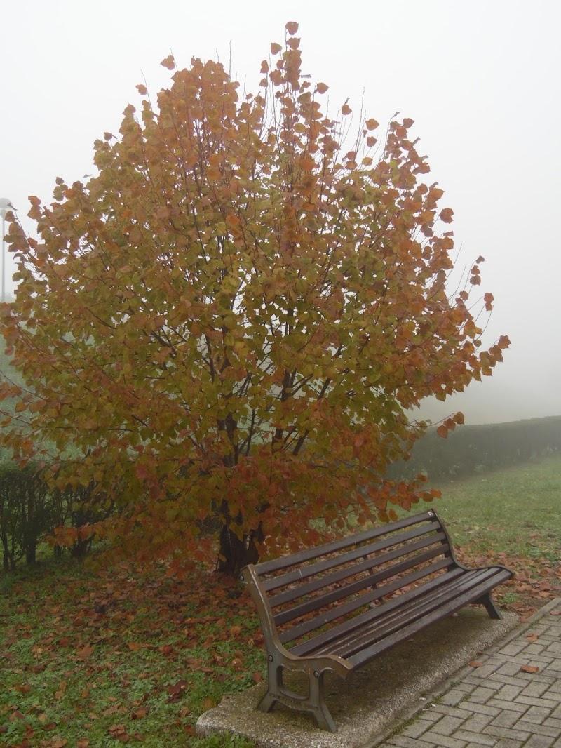 Nebbia di supergigi
