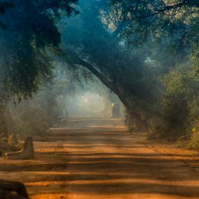 Landscape by Deepak Goswami - Landscapes Prairies, Meadows & Fields ( bharatpur bird sanctuary )