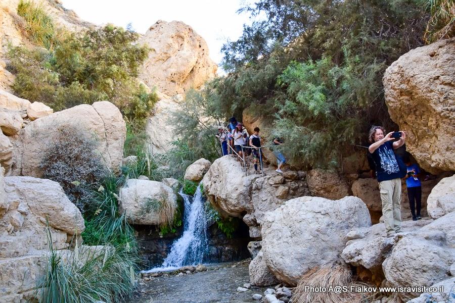 Маршрут по ручью Давида в заповеднике Эйн-Геди. Экскурсии в Израиле.