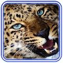 Jaguar Love Heart icon
