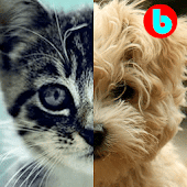 Cats & Dogs - Baby Game