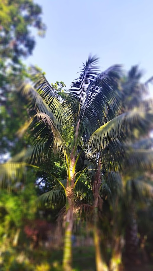 Foto Jardín botánico Fundación Sales 26