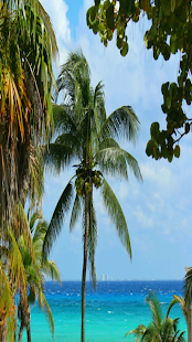 Caribbean Wallpapers- screenshot thumbnail