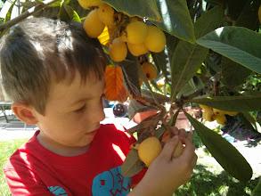 Photo: Clark Harvests Mystery Fruit