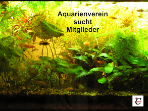 Photo: Blogeintrag Verein sucht Mitglieder