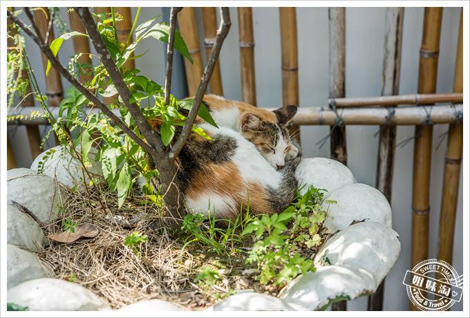 山里車站貓