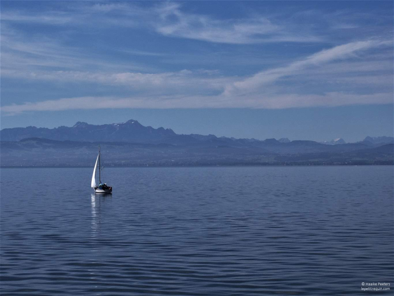 Bodensee (Le petit requin)
