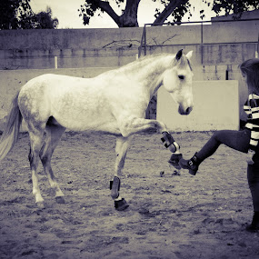 by Anabela Henriques - Uncategorized All Uncategorized ( friends, horse,  )