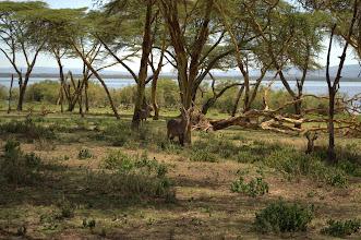 Photo: Crescent Island, Lake Naivasha