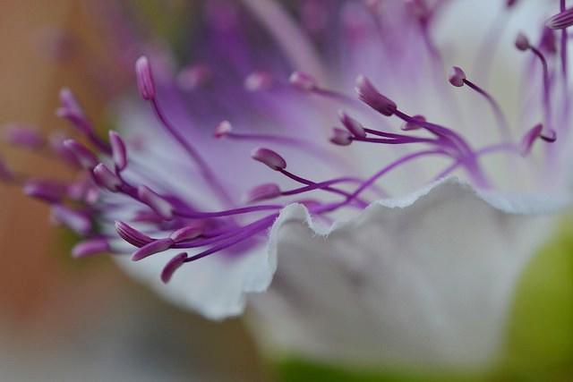 il fiore del cappero di ELENA 77