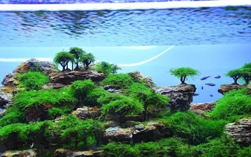 aquascape design ideas - android apps on google play