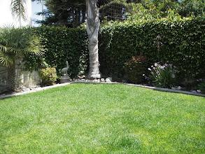 Photo: Backyard