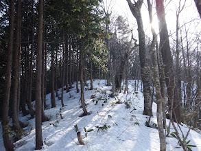 笹が出てきたが雪も多く