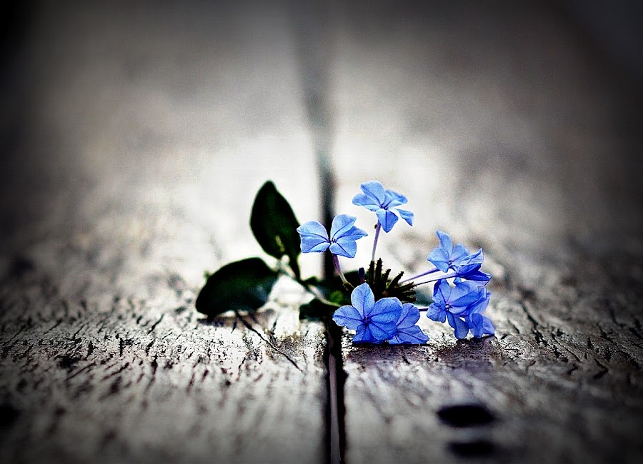 Broken Flower by Vandy Ahmad - Nature Up Close Flowers - 2011-2013