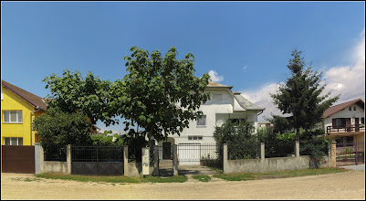 Photo: Arborele Printesei (Paulownia) - din Turda, Str. Octavian Goga - 2019.07.17