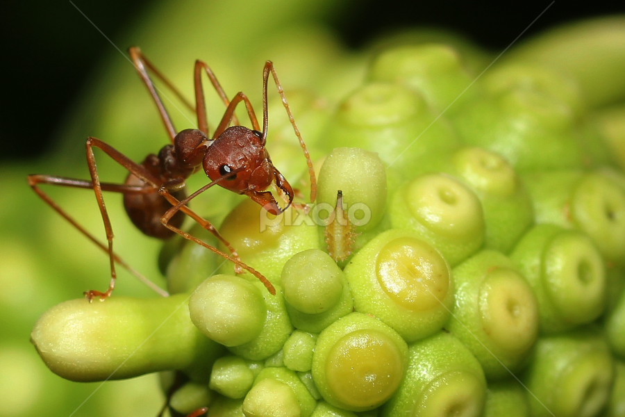 Ant Story by Mark St - Animals Insects & Spiders