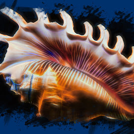 Majestic Beauty by Dave Walters - Digital Art Things ( macro, lumix fz2500, abstract, sea shell, colors, digital art )