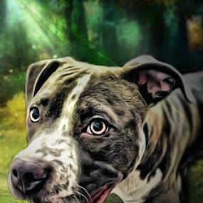 Mens Best by Paul Gibson - Digital Art Animals ( art, graphic art, dog, light, photoshop,  )