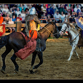 The Joust by Elk Baiter - Sports & Fitness Other Sports ( horse, maryland, festival, knight, joust, medieval, renaissance, spears,  )