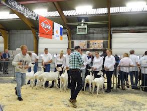 Photo: Rubriek 1: witte lammeren geboren 16/3 en 3/4 2015.  1a. Margje 166; 1b. Maisy 49; 1c. Moniek 58; 1d. Moniek 55; 1e. Moniek 59;  2a. Driesprong Marijke 6; 2b. Driesprong Jannie 31.