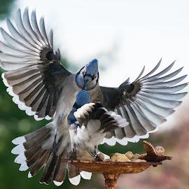 by Marie Schmidt - Animals Birds (  )