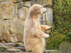 Photo: Das muss Knut sich genauer ansehen ;-)