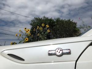 86  GT-LTDのカスタム事例画像 落花生畑の御隠居さんの2018年09月23日20:31の投稿
