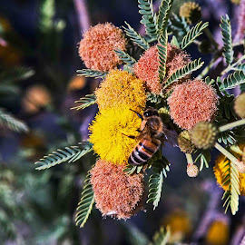 Buzzing Around by Will McNamee - Animals Insects & Spiders ( aundiram@msn.com, danielmcnamee@comcast.net, mcnamee2169@yahoo.com )