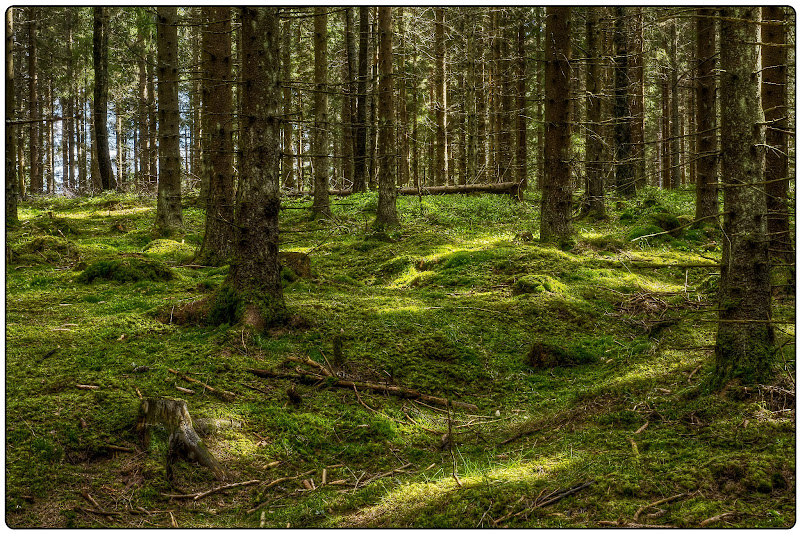"""Photo: """"Green Forest"""""""
