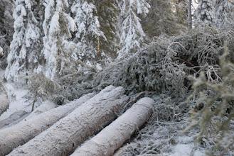 Photo: Sveaskogs snitselband visar att avverkningen inte var något misstag utan planerad. Skogsstyrelsen hade uppenbart inget att invända när skogen avverkningsanmäldes.