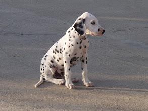 Photo: Puppy Love