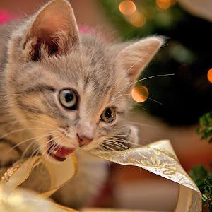 Loves Christmas.jpg