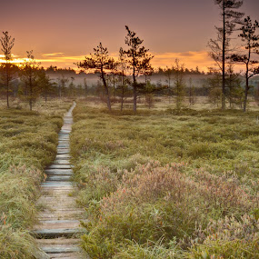 One Morning in Maine by Tom Whitney - Landscapes Prairies, Meadows & Fields ( nature, maine, autumn, fog, path, meadow, sunrise, bog, landscape, misty, heath )