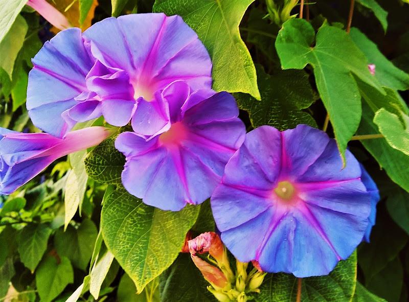 Violet 5 di francesco_abate