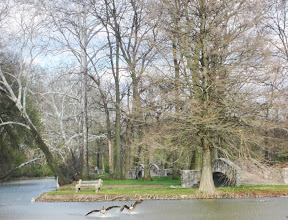 Photo: Two Canadian Geese landing in a pond by a stone bridge at Eastwood Park in Dayton, Ohio.