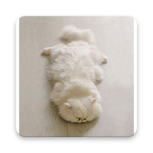 Super Cute Cats (app)