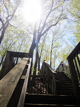 Photo: Wooden staircase going up into the trees at Cox Arboretum in Dayton, Ohio.