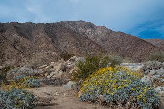 Photo: Borrego Palm Canyon trail, Anza Borrego SP